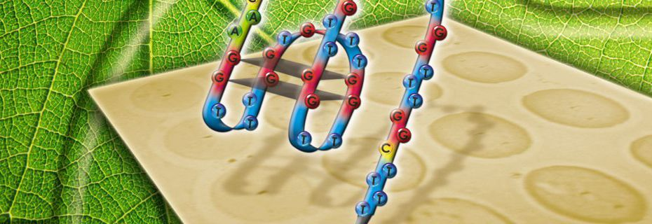 Aptamer-based biochips for label-free detection of plant virus coat proteins by SPR imaging